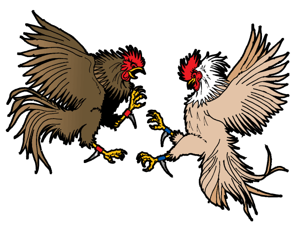 Game Cock Fighting 19