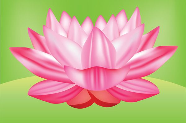 lotus flower vector graphic free  vector 365psd com lotus flower clipart png lotus flowers watercolor clipart