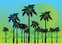 Free Palm Tree Vectors