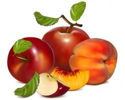 Stock Ilustrations Red Apple
