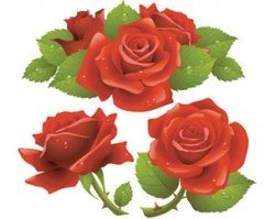 Stock Ilustrations Red Roses
