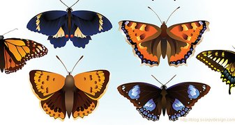 Butterfly Vector Animal Vectors Butterfly