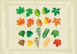 Full Color Vector Leaves