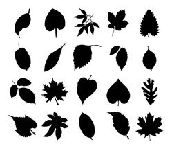 Vector Collection of Leaf Silhouettes